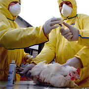 View story [ Image: Scientists studying H5N1 virus (Src: photos.state.gov) ]