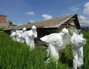 Health workers remove dead chickens from a Nepalese poultry farm hit by a suspected avian influenza outbreak in 2013. The Netherlands is revamping its system for regulating sensitive biological research amid an ongoing controversy over a Dutch-based study that modified H5N1 bird flu in lab settings.