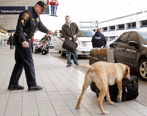 (Jan. 13) -A dog sniffs luggage for explosives at Detroit Metropolitan Airport on Dec. 26, one day after Umar Farouk Abdulmutallab allegedly attempted to bomb an airliner arriving at the city. U.S. Customs and Border Protection received information on Abdulmutallab three days before the flight, officials said (Bill Pugliano/Getty Images).